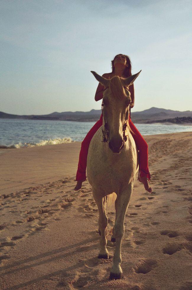 Aureta_Horse_04